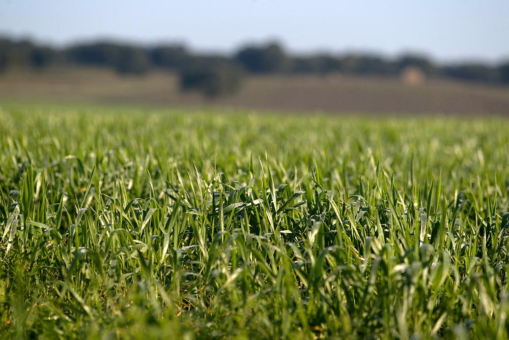 Carnalentejana - Alimentação: Pasto Verde - O nosso compromisso com o consumidor